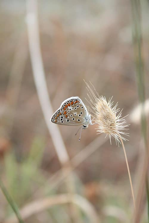 voorbeeld vlinder opgeslagen met save for web